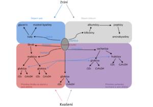 enzymové činnosti probíhající v těstě
